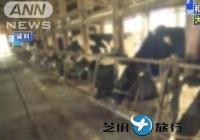 """日本男子""""偷运""""和牛受精卵去中国 政府紧急研讨对策"""